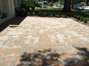Unsealed paver driveway 6 months after installation in Tampa